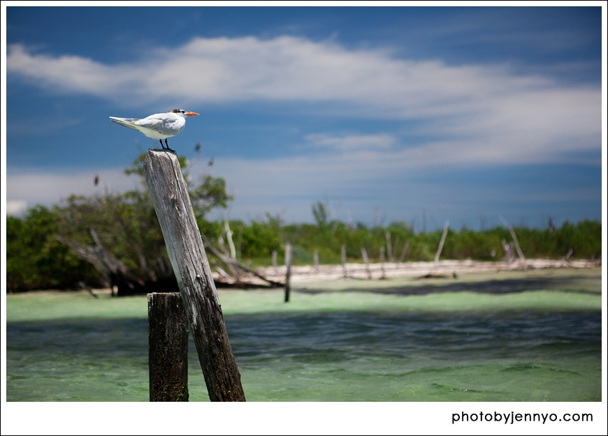 Playa Del Carmen, Mexico, Travel, Photographer